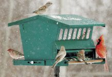 How to Hang and Care for Window Bird Feeders