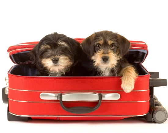 packing tips for taking a dog on a vacation