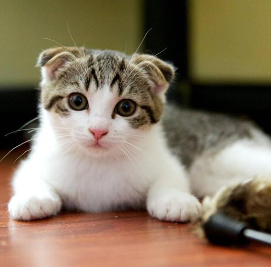 10 Most Popular Cat Breeds In The World The Pets Central