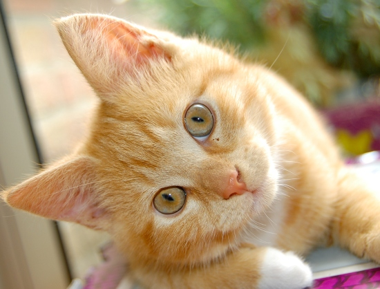 tips to control bad breath in cats
