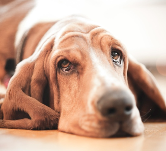 ways to identify depression in pets