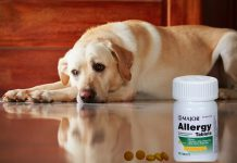 Should you use Chlorpheniramine for Dogs?