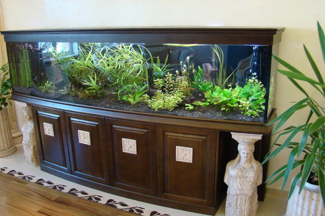 Tips to Start Freshwater Tropical Aquarium at Home