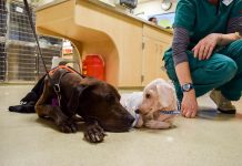5 Things To Remember While Treating Rescued or Stray Dogs