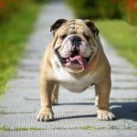 5 Things You Must NOT Do To Bulldogs