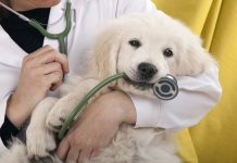 7 Ways to Monitor Your Pet's Health