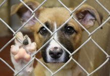 5 Things You Did Not Know About Pet Adoption