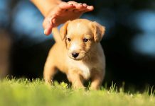 6 Things to Know Before Adopting a Dog